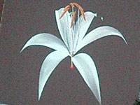 再現された花
